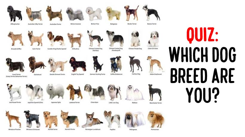 Find The Right Dog Breed For You Quiz